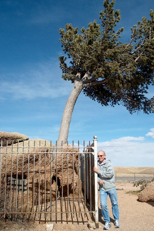 don-tree-rock