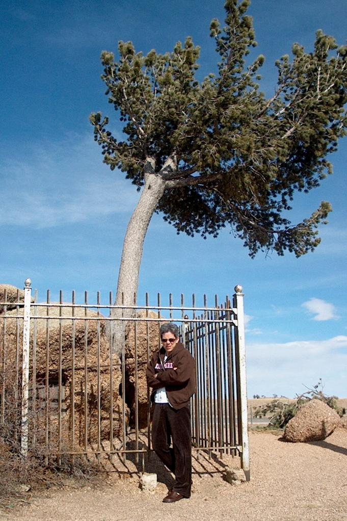 lynn-tree-rock